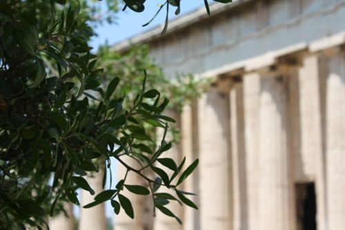 ancient marble temple greece and olive tree